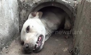 Dog rescued after getting stuck in concrete drain pipe