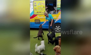 Haagen-Dogs! Adorable moment very good dogs get cold treats from ice cream truck in UK