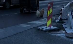 Dog Walks, Human Drives