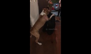 Excitable dog reunited with owner in El Salvador after spending two years apart