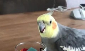 Bird Wins Bout with Glass