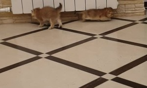 Cute Kittens Tangle on Tile