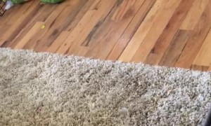 Blind and Deaf Dog Plays Fetch