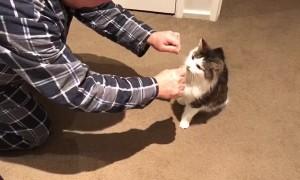 Feline Likes to Floss