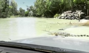 Waiting at an Australian Croc Crossing