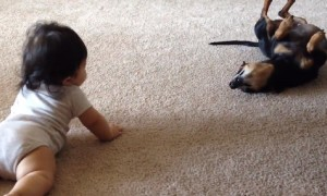 Dog's first interaction with baby is absolutely priceless