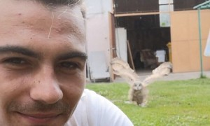 Baby owl adorably runs over to owner when called