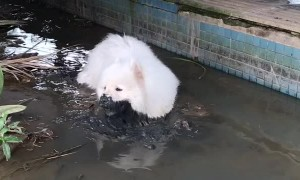 Fluffy Dog Not so White Anymore