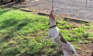 Hilarious Dog Hanging Around