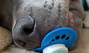 Puppy Holds onto Pacifier