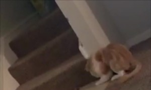 Cheering for Football Frightens Kitty