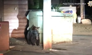Bear cub rescued from dumpster by police