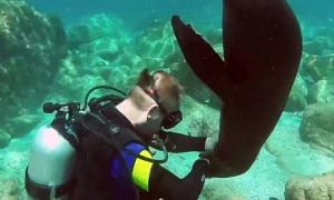 Playful sea lion attacks diver in Mexico