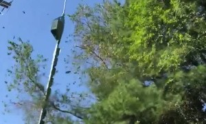 Trees Get Trimmed by Live Power Lines