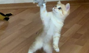 Playing on Two Paws