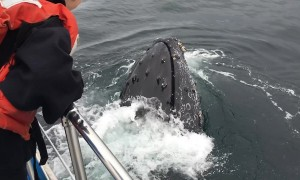 Up-close encounter with friendly humpback whale