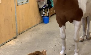 Dog and Horse Have a Hug