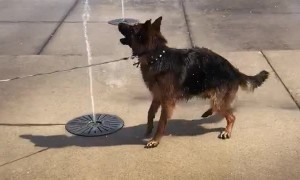 Dog Tries to Catch Water Fountain