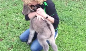 Baby Donkey Craves Cuddles