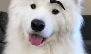 Silly pup looks ridiculous with fake eyebrows