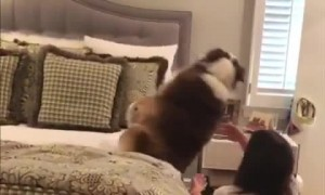 Fearless dog repeatedly performs