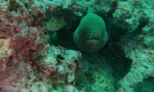 Freedive with a Fifteen Foot Moray Eel