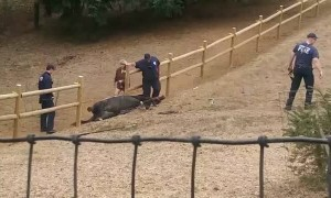 Fire Department successfully releases horse stuck under fence