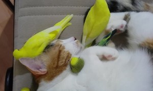 Cat Cuddles a Bunch of Birds