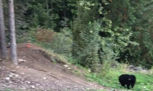 Mountain Bike Jumps Bear