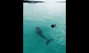 Dolphin and dog incredibly play in the water together
