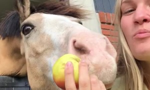 Human and Horse Sharing a Snack