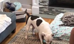 Excited pup opens up his birthday presents