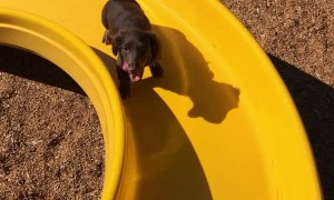 Little Legs Work Hard to Climb Slide