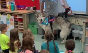 Kids sing 'Happy Birthday' to school's therapy dog