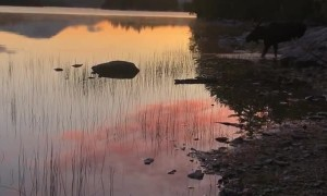 Sunrise Scene on the Appalachian Trail