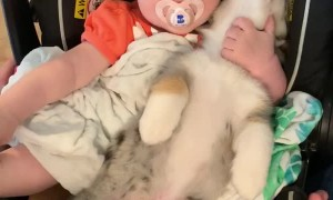Baby and Puppy Become Good Friends