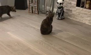 Kitties Spooked by Light-Up Skeleton Statue