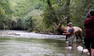 Beautiful Bull Elk by Fly Fisherman