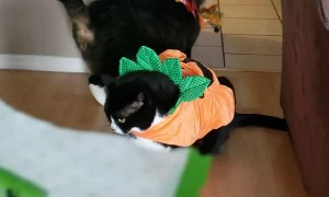 Kitty Doesn't like Halloween Costume