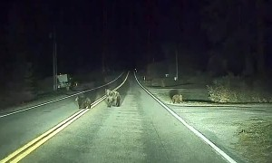 Self-Driving Car Saves Momma Bear and Cubs