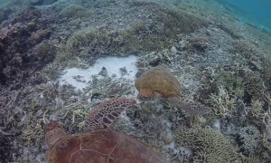 Naughty Turtle Gets Told off for Biting