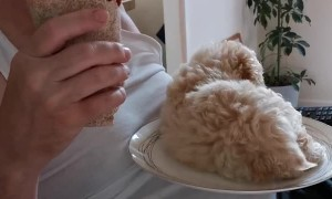 Excited Puppy Climbs on Plate