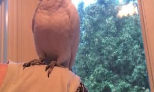 Bird is All Bark