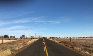 Huge Herd of Elk Crossing the Road