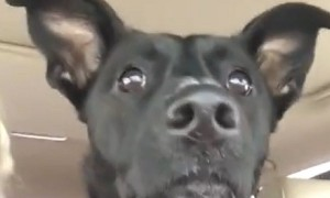 Dog loses her mind after realizing she's at the dog park