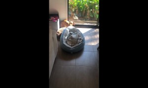 Dog drags bed to be in the sunlight