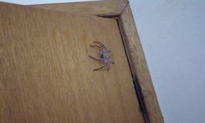 Bathroom Surrendered to Spider