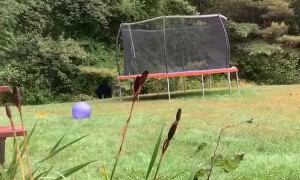 Bear Walks Through Shocked Woman's Yard