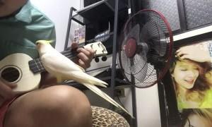 Bird Joins in for Delightful Duet