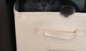 Cat adorably plays inside laundry box